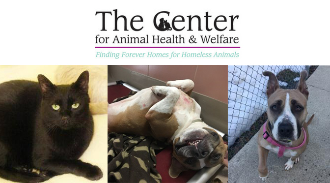 Meet HAZY, Munchkin, and Budgie at The Center for Animal Health and Welfare