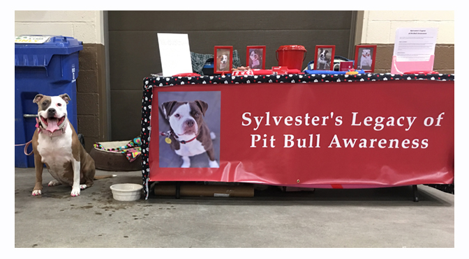 INTERVIEW WITH ANN FISHER: Sylvester's Legacy of Pit Bull Awareness – By: Janel Spiegel