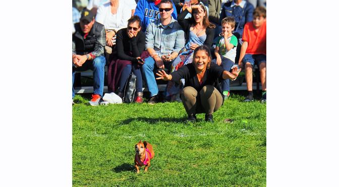Oktoberfest Dachshund Races and Weiner Dog Parades Return to SteelStacks in October