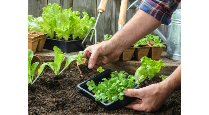 Gardening Tips    By Joe Scrizzi